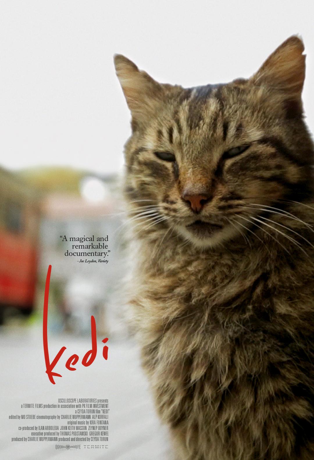 Poster Kedi
